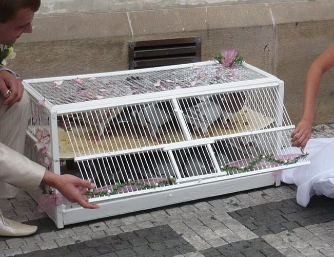 (12) Velká klec pro hejno 30 - 50 holoubků
